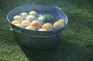 バケツで冷やしている果物の写真素材 [FYI03230867]