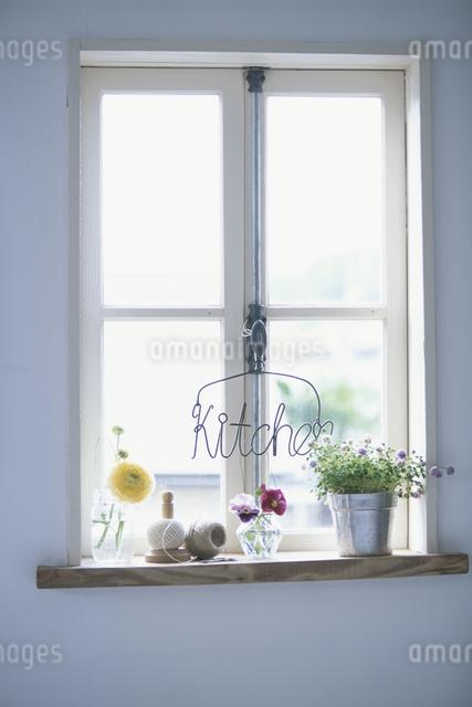 窓辺の植物の写真素材 [FYI03230938]