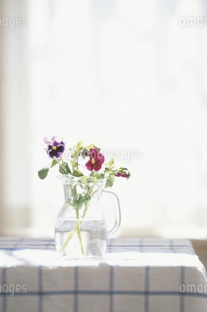 テーブルの上の花の写真素材 [FYI03230966]