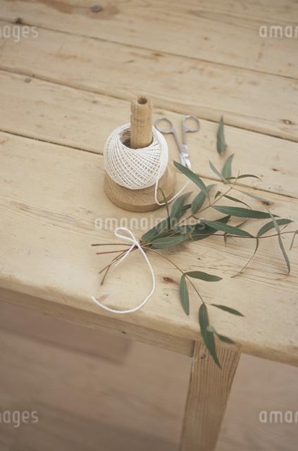 糸巻きとユーカリの写真素材 [FYI03230996]