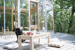 テラスでくつろぐ犬の写真素材 [FYI03231028]