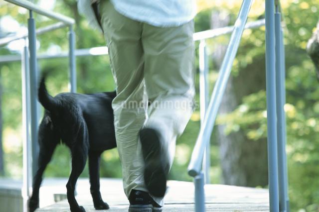 犬と男性の写真素材 [FYI03231064]