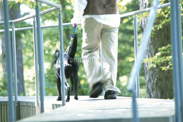 犬と男性の写真素材 [FYI03231065]