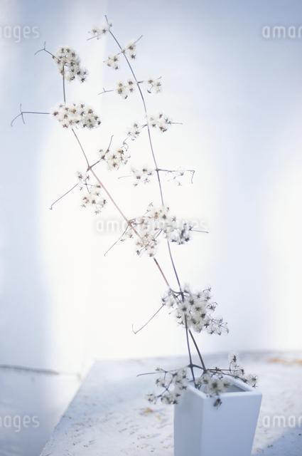 花瓶に入った花の写真素材 [FYI03231080]