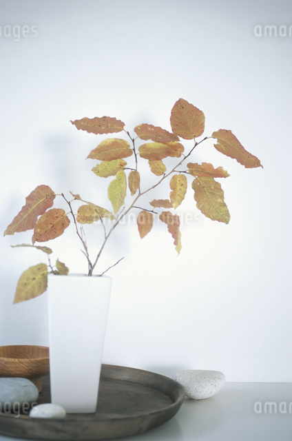 器に入った植物の写真素材 [FYI03231081]