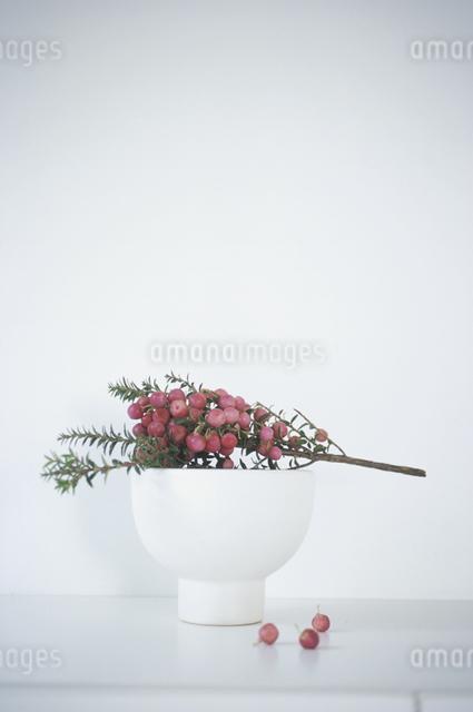 器に入った植物の写真素材 [FYI03231082]