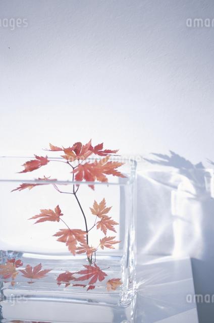 器に入った植物の写真素材 [FYI03231083]