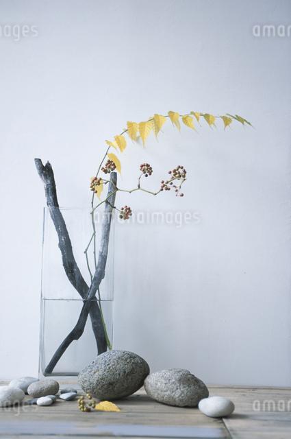 器に入った植物の写真素材 [FYI03231085]