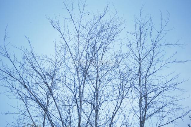 空と木の枝の写真素材 [FYI03231094]
