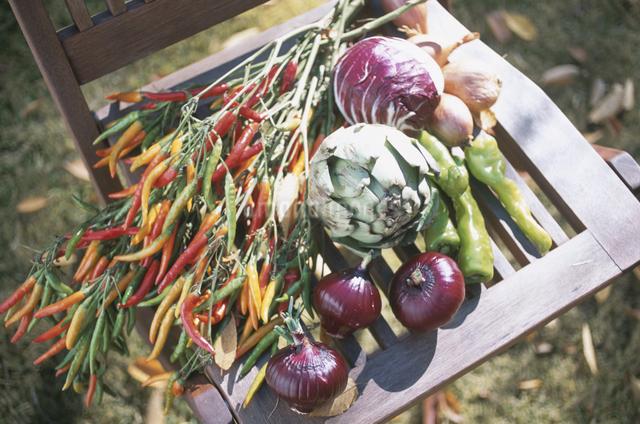 沢山の野菜の写真素材 [FYI03231110]