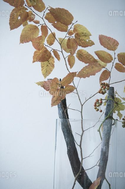 木や石のオブジェの写真素材 [FYI03231162]