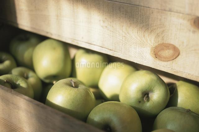 リンゴの写真素材 [FYI03231171]