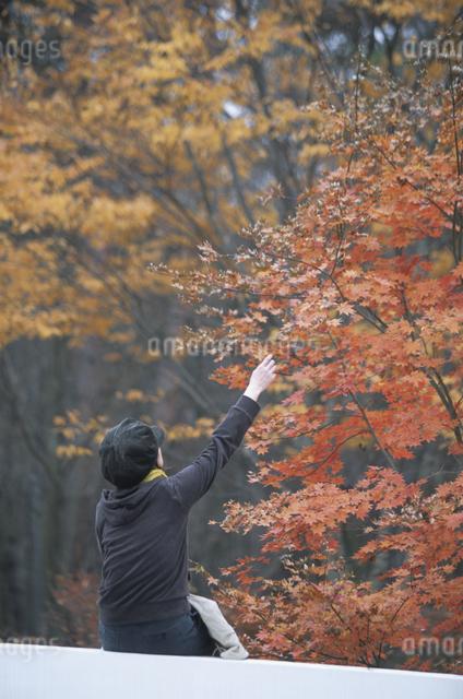 紅葉を見る女性の写真素材 [FYI03231172]