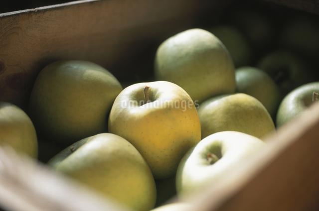 リンゴの写真素材 [FYI03231175]