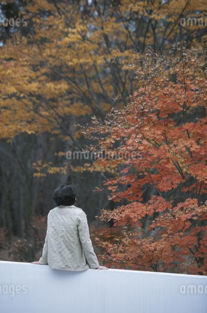 紅葉を見る女性の写真素材 [FYI03231176]