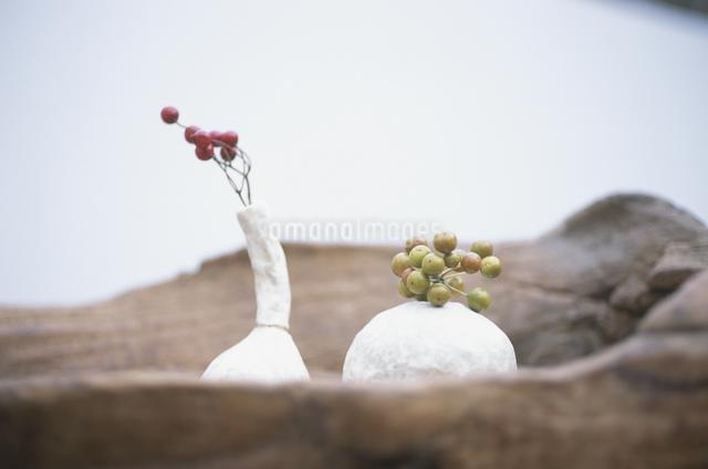 ノバラの実とサンキライの実の写真素材 [FYI03231201]