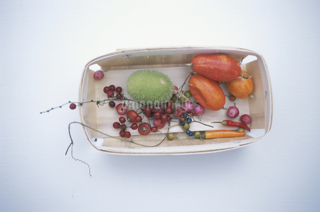 カラスウリとイガメロンと木の実の写真素材 [FYI03231207]