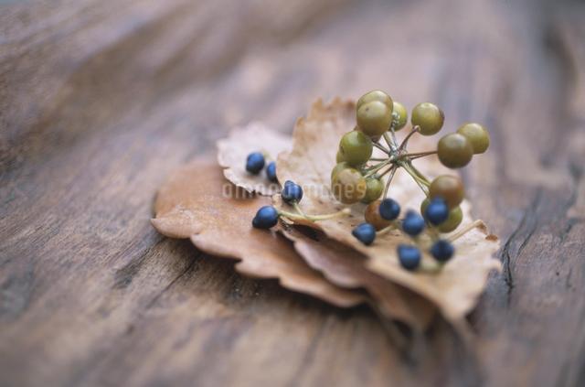 落ち葉と木の実の写真素材 [FYI03231217]