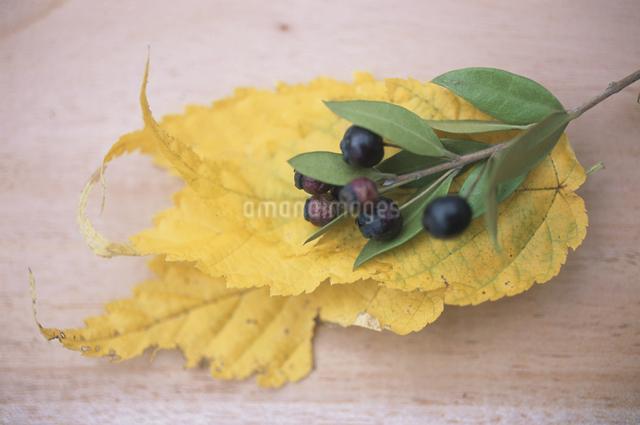 落ち葉と木の実の写真素材 [FYI03231218]
