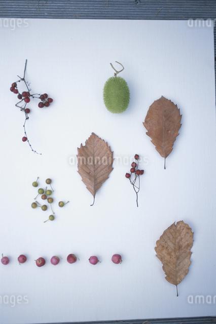落ち葉と木の実の写真素材 [FYI03231221]