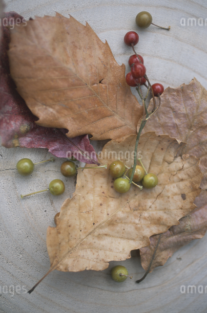 落ち葉と木の実の写真素材 [FYI03231222]