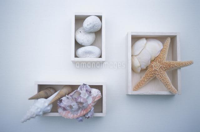 貝とヒトデと石の写真素材 [FYI03231224]