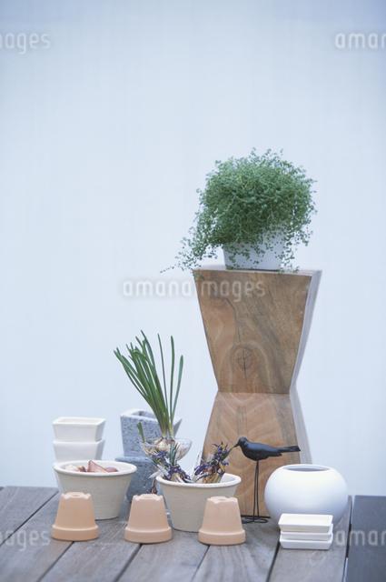 植物やオブジェの写真素材 [FYI03231227]