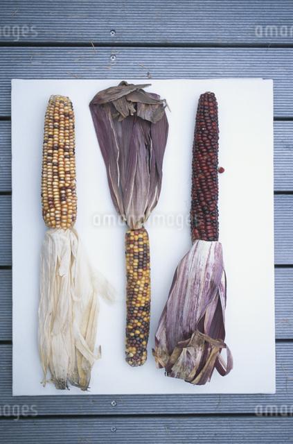 トウモロコシの写真素材 [FYI03231228]