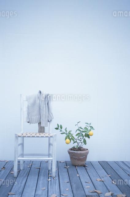 イスにかけた服とレモンの苗の写真素材 [FYI03231239]