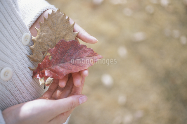 落ち葉を持つ手の写真素材 [FYI03231252]