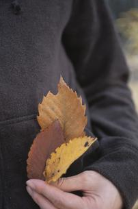 落ち葉を持つ手の写真素材 [FYI03231257]