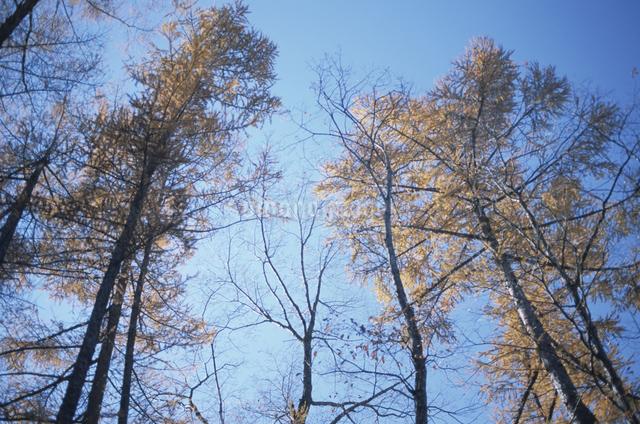 木と空の写真素材 [FYI03231269]