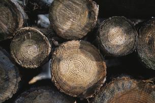 薪の写真素材 [FYI03231270]