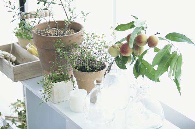 ハーブの家庭菜園の写真素材 [FYI03231272]