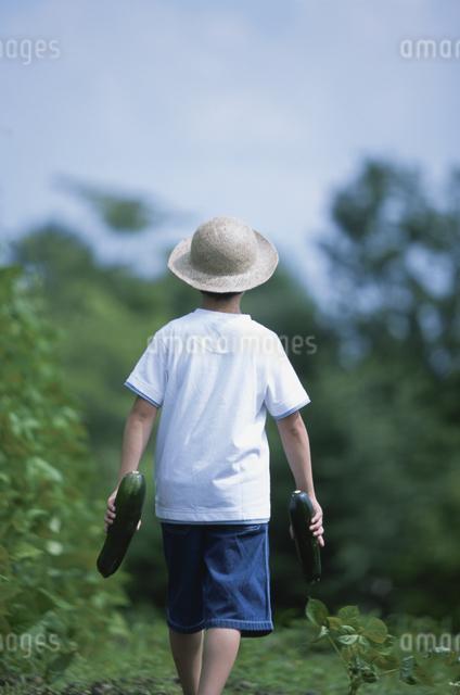 後姿の男の子の写真素材 [FYI03231328]