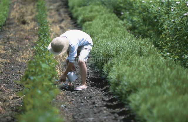 畑の中の子供の写真素材 [FYI03231333]