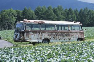 畑の間を走るバスの写真素材 [FYI03231344]