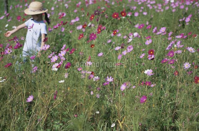 花畑で遊ぶ女の子の写真素材 [FYI03231346]