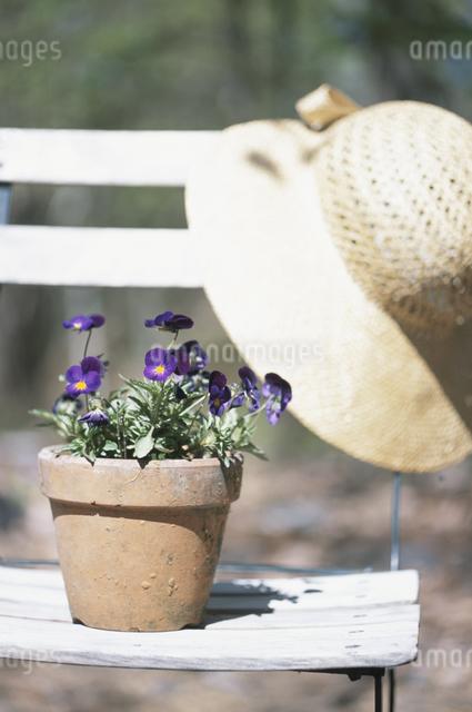 鉢植えと麦藁帽の写真素材 [FYI03231385]