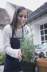 庭でラベンダーを鉢に植える女性の写真素材 [FYI03231734]