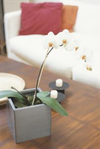 蘭の鉢の写真素材 [FYI03231842]