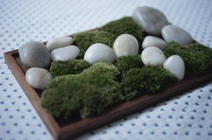 苔と石の写真素材 [FYI03233164]