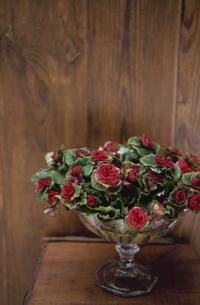花器に活けた花の写真素材 [FYI03233262]