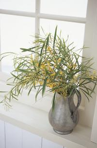 窓辺の植物の写真素材 [FYI03233330]