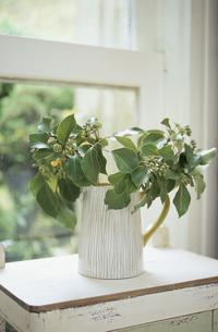 窓辺に置いた植物の写真素材 [FYI03233360]
