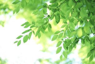 新緑の写真素材 [FYI03233494]