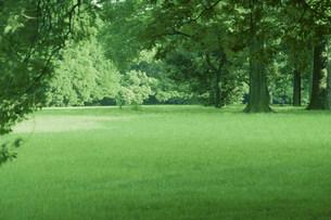 新緑の公園の写真素材 [FYI03233589]