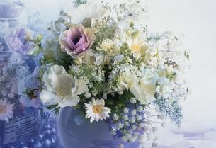 花瓶に生けたレースフラワー・アネモネ等の写真素材 [FYI03233696]
