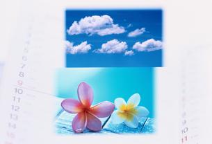 空と花の合成イメージの写真素材 [FYI03233722]