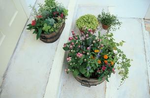 床にある植物の写真素材 [FYI03233839]